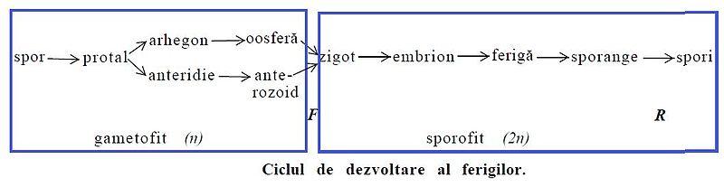 Ciclu de viață al produsului - Wikipedia