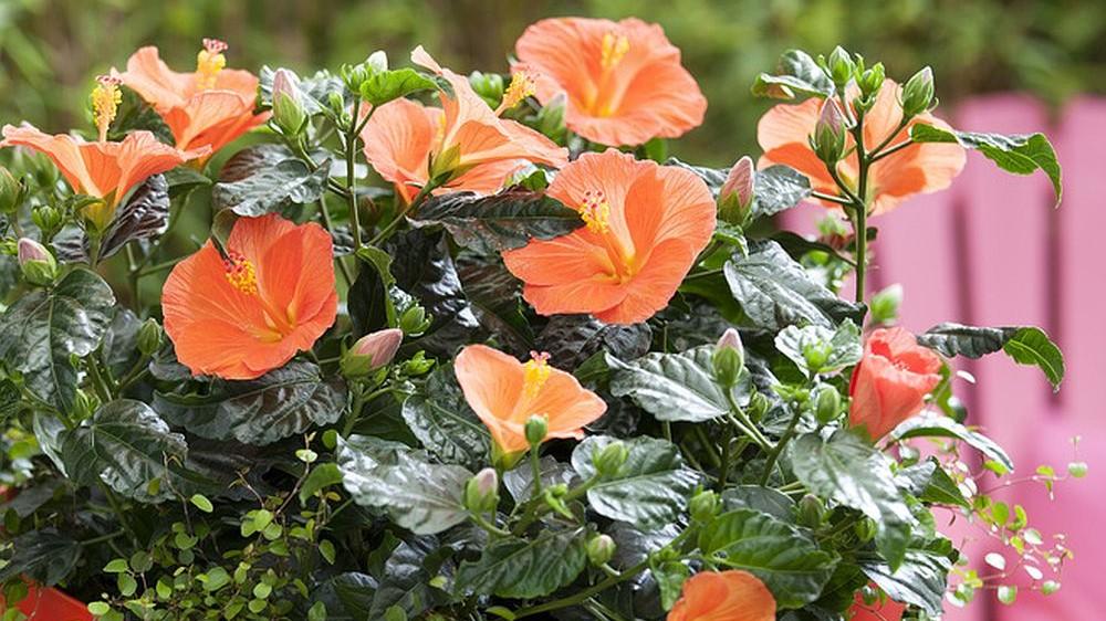 Parazitii plantelor de interior - Casă şi familie > Plante - topvacanta.ro