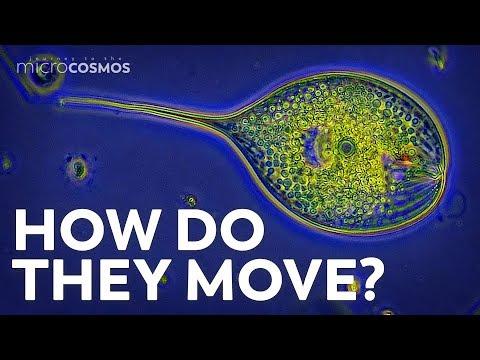 Paraziti afectarea ochilor - Microparaziți moarte invizibilă
