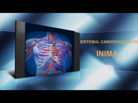 Aflați cum inima bate în fazele ciclului cardiac Ciclul circulator în corpul uman