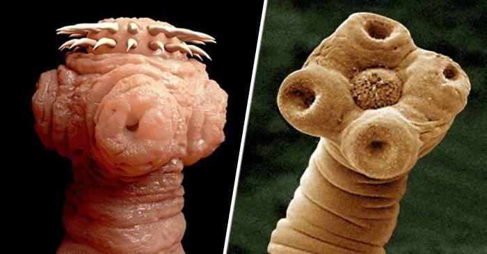 ca arătând viermi la oameni