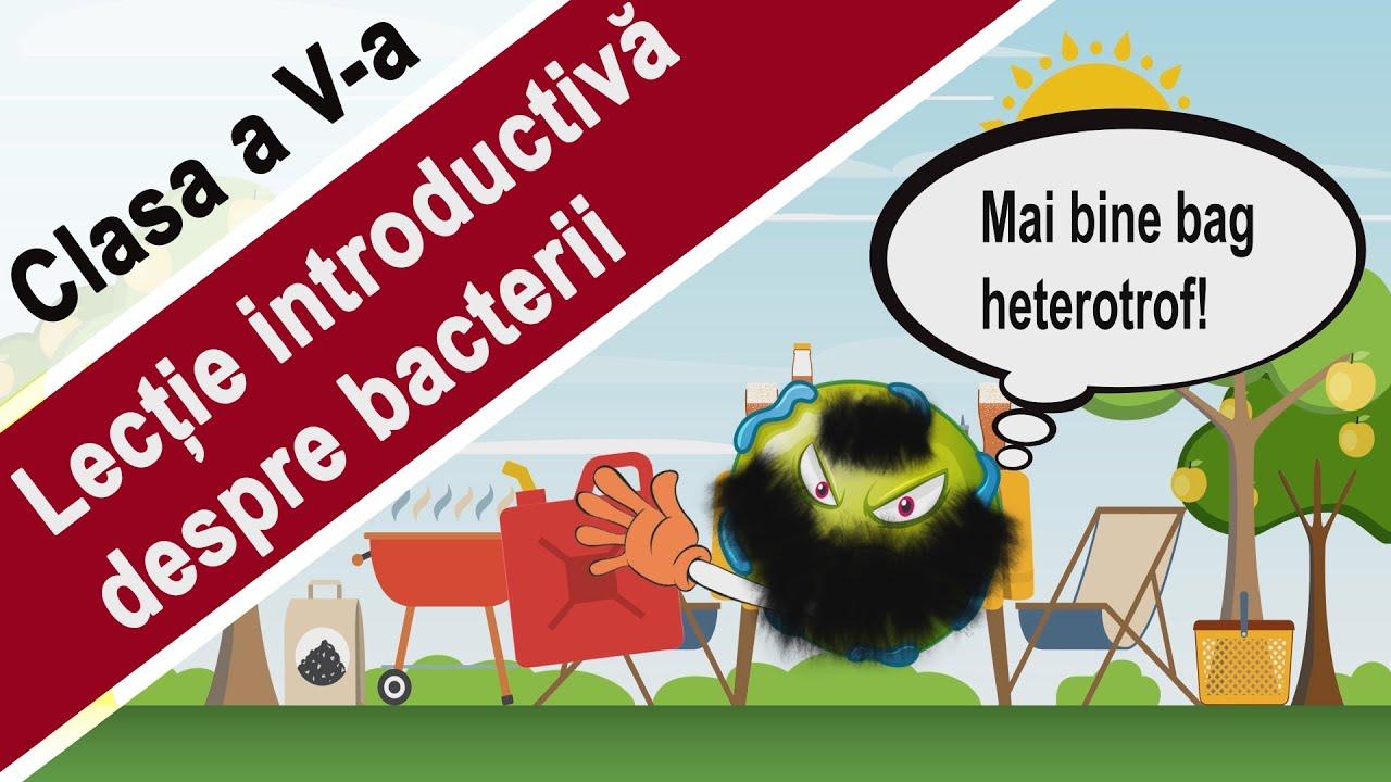 bacterii halofile