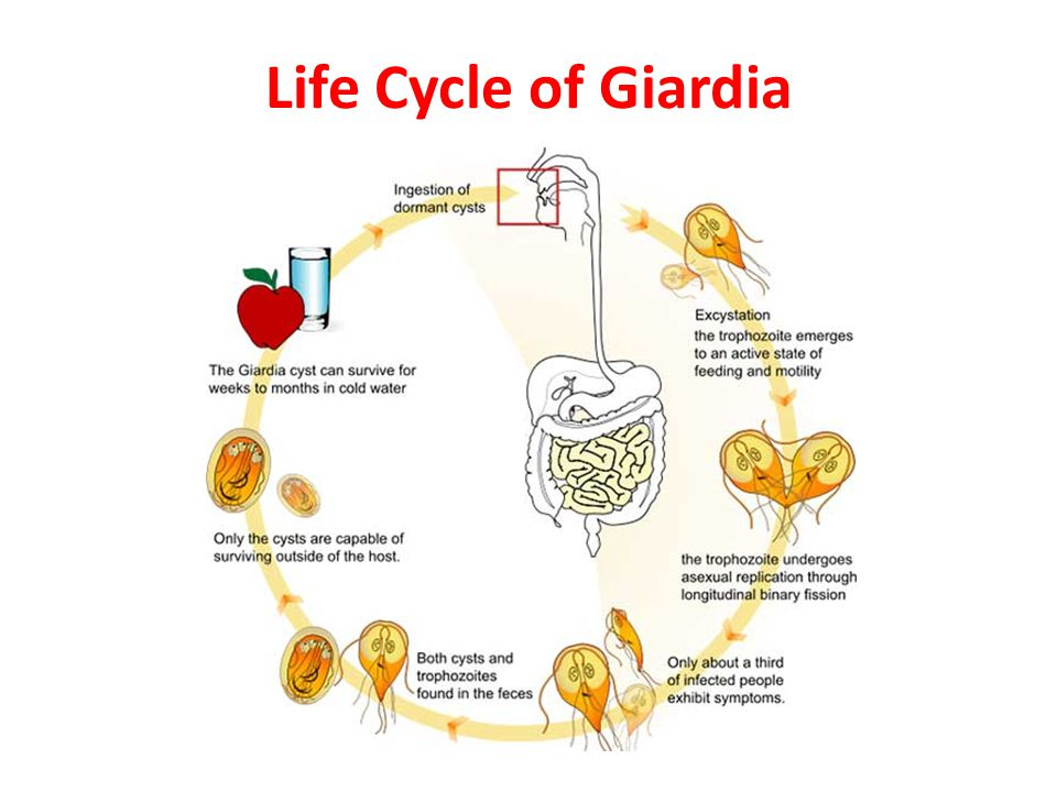 giardia besmetting mens gastric cancer quality of life