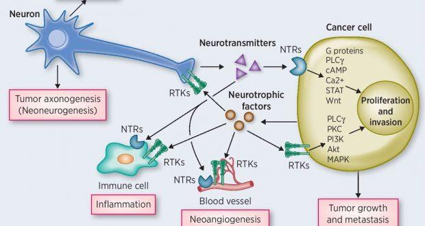 gastric cancer vagus nerve
