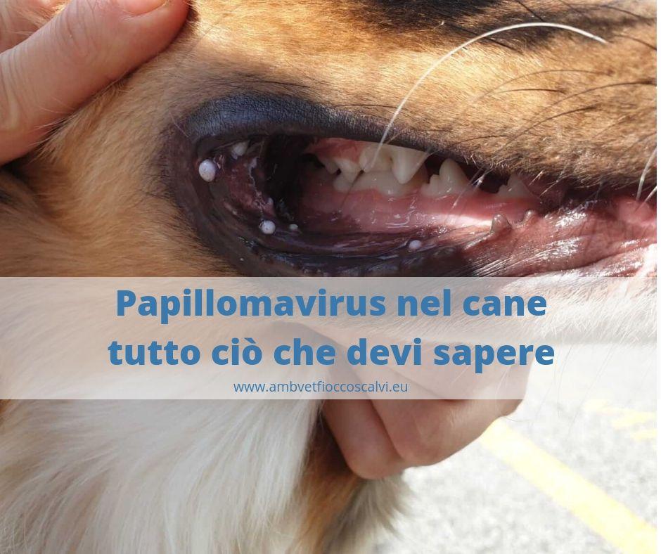 papilloma virus alla gola come si prende copii cu erupții cutanate asociate cu viermi