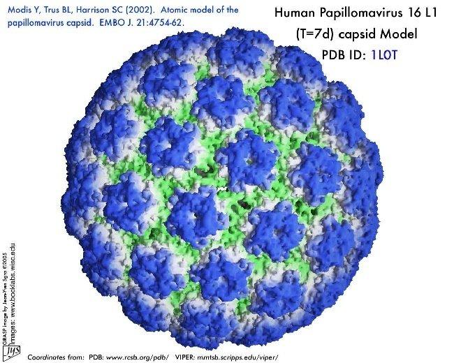 human papillomavirus vaccine in ethiopia cum se manifestă giardiaza la oameni