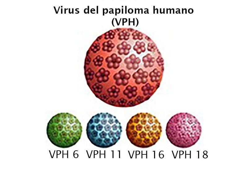 hpv virus en voeding