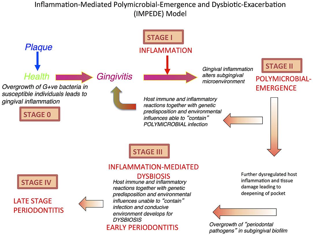 dysbiosis explained
