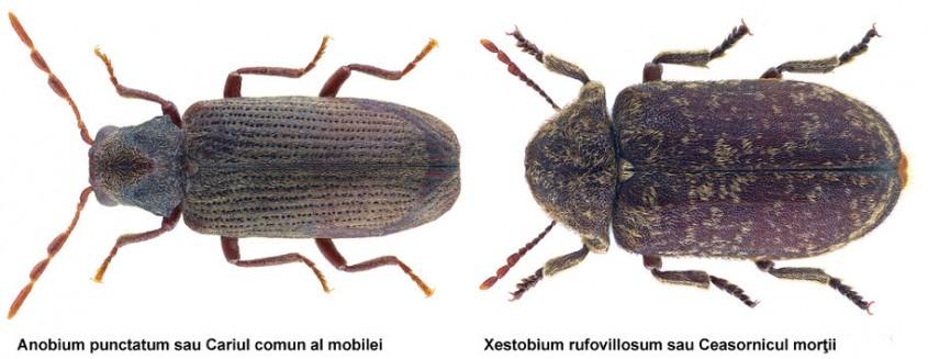 Categorie:Insecte în română