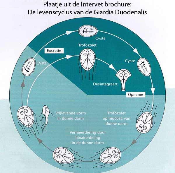 giardia besmetting mens Krasnogorsk elimină papiloamele