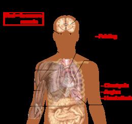 hpv vaccine prevents
