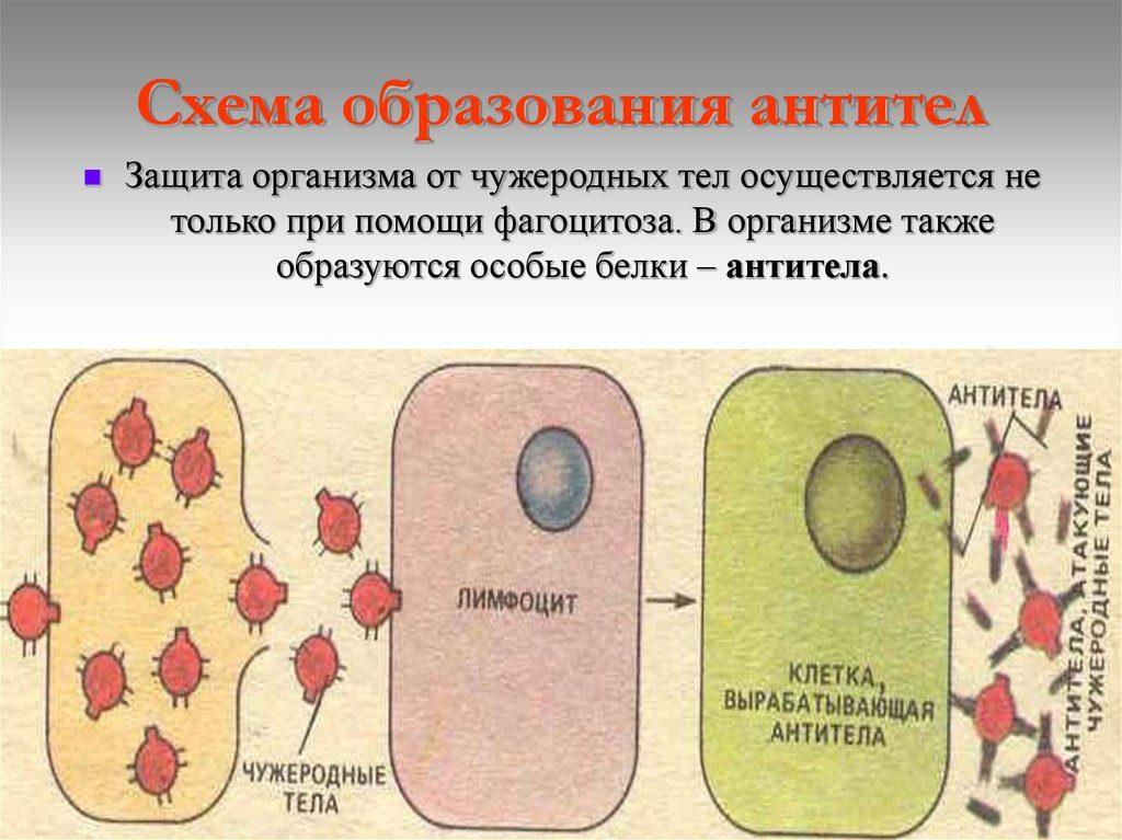 Analize de Imunologie - Ecomed