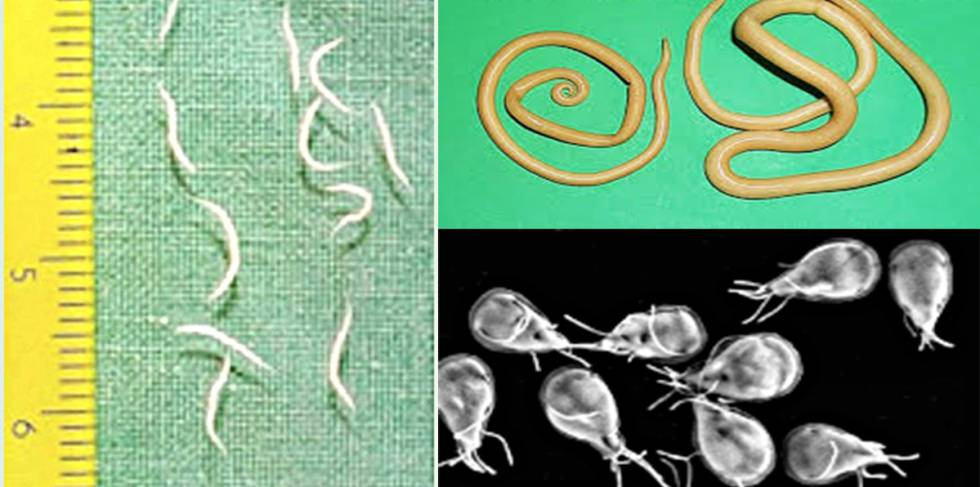 oxiuros y diarrea hpv positive ovarian cancer