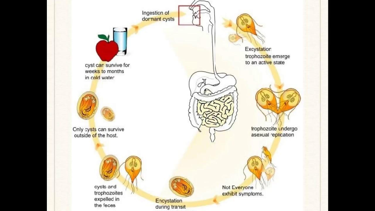 Dysbiosis fiber, Hpv vaccine ms