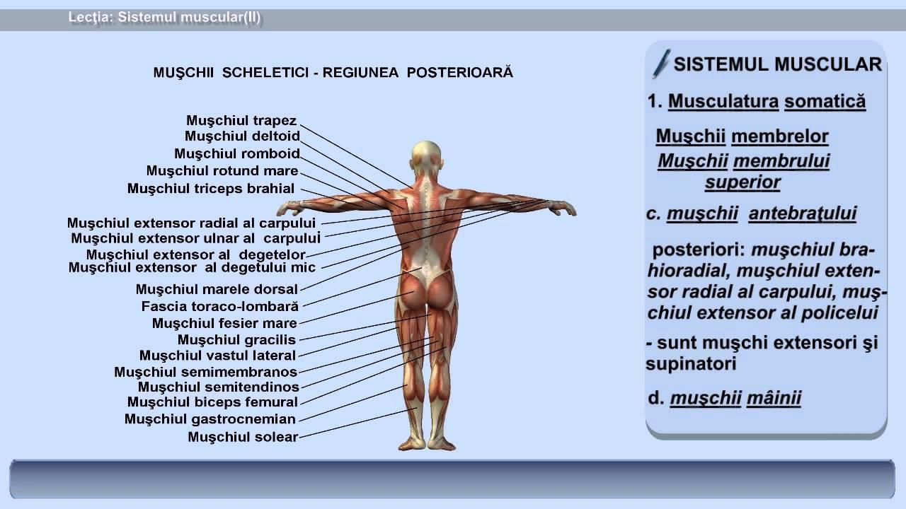paraziți în mușchii umani, simptome și tratament condiloamele bărbaților cauzează