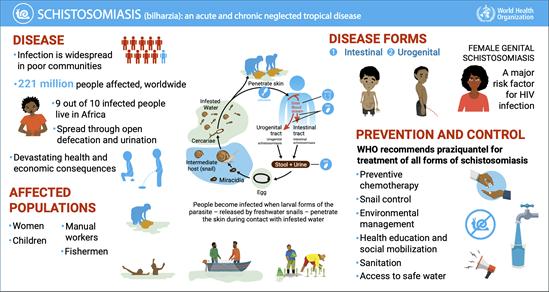 Schistosomiasis( bilharziose). Înțelesul