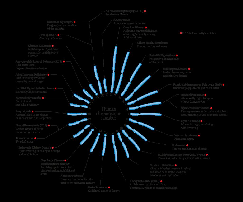 Polipoza adenomatoasă familială-mutații APC - Synevo