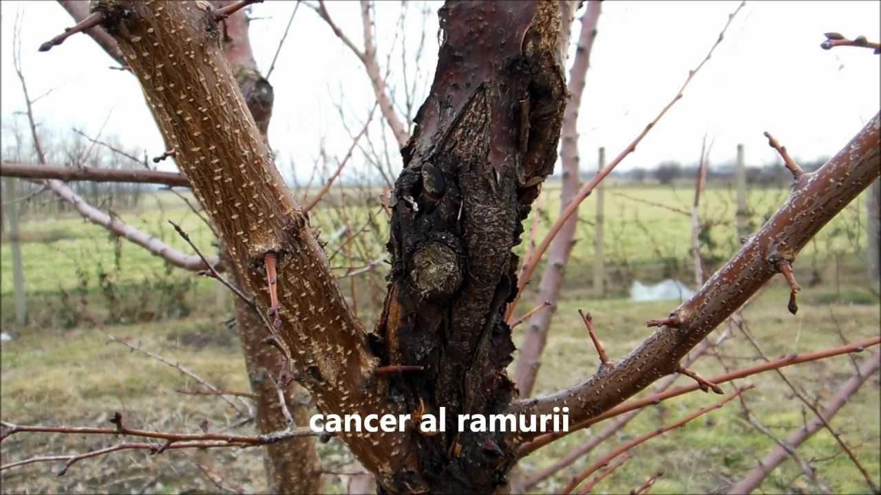 Bolile si daunatorii trandafirilor | Farmbee