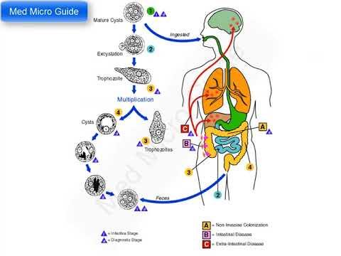 human papillomavirus infection icd 10