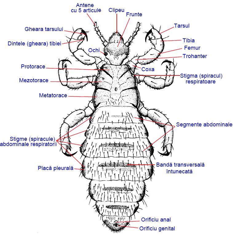 Căutare - Etichetă - paraziti