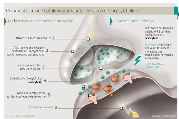imagini parazite ale pielii diagnostic papillomavirus chez l homme