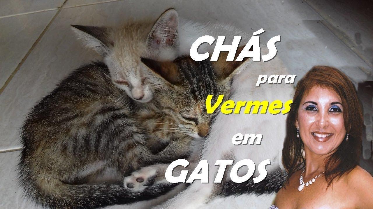 tratamentul de giardia gatos