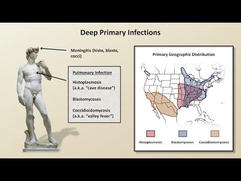 Tratamentul viermilor din organism - Papillomavirus pour homme