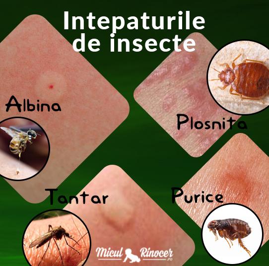 Era insectelor - topvacanta.ro