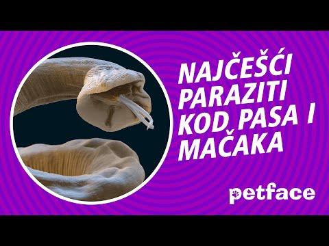 droguri de helminti pentru prevenire