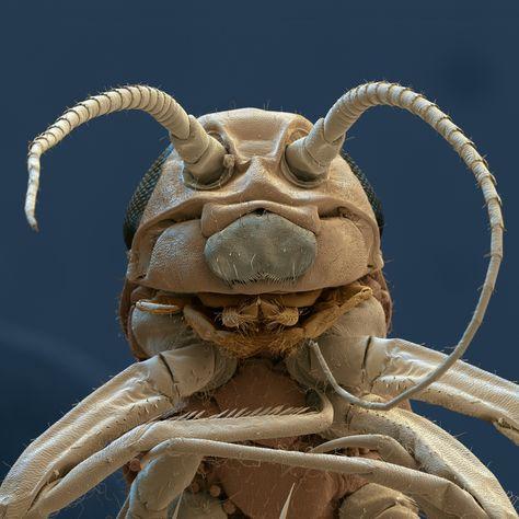 Verucile genitale vor elimina toate verucile genitale sunt papiloame