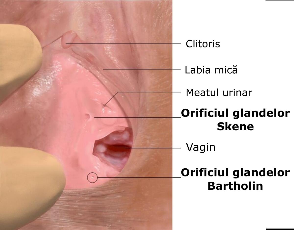 Cancerul vulvar: tipuri şi semne îngrijorătoare