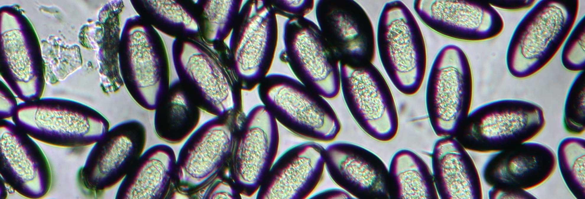 Papilomatosis bovina prevencion Giardini naxos taormina entfernung