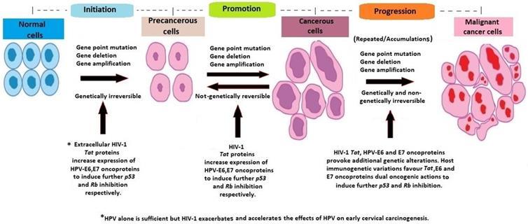papilloma cancer cells