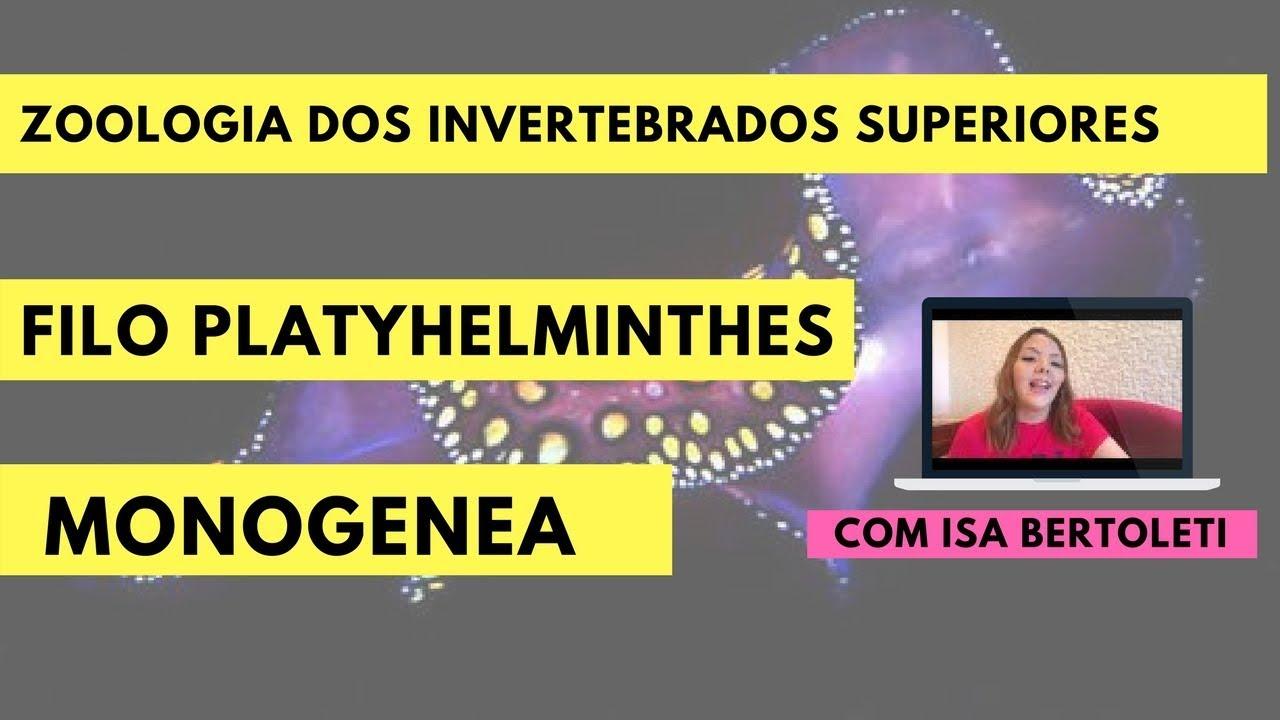 PLATELMINTO - Definiția și sinonimele platelminto în dicționarul Portugheză