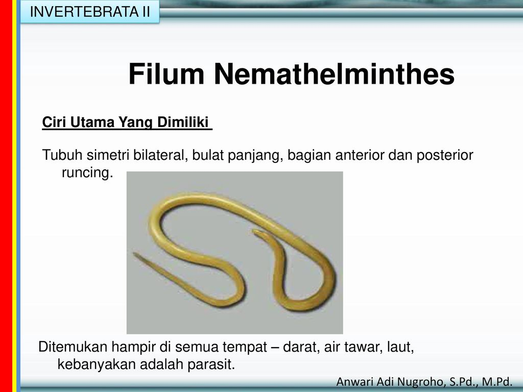 Cacing platyhelminthes ppt Cacing nemathelminthes ppt