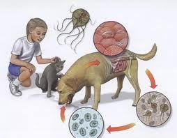 giardia simptome sânge în scaun