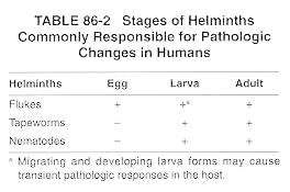 Helminth root meaning. Helminth root meaning. Traducerea «flatworm» în 25 de limbi