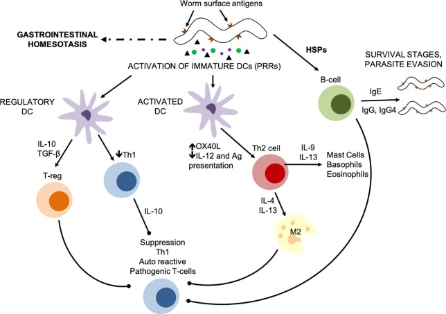 Anticorpi pentru antigeni de giardia