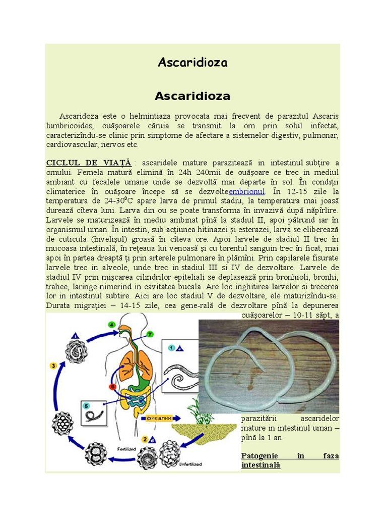 helmintiaza ce inseamna seminte de dovleac pentru paraziti intestinali