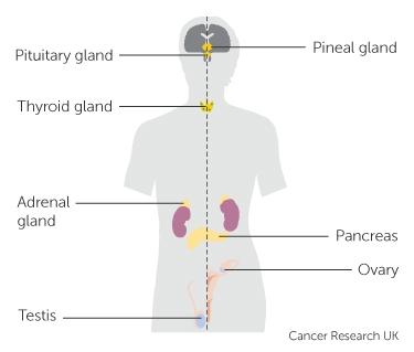 Cancer and hormones - Actualizări în tratamentul hormonal al cancerului de sân