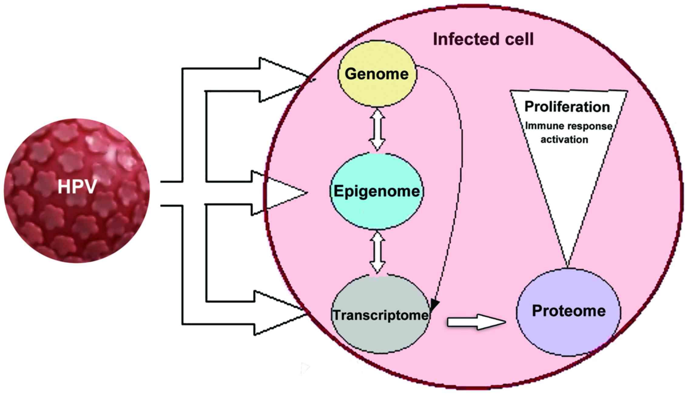 hpv virus and urinary tract infections tratamentul ambulator al condiloamelor