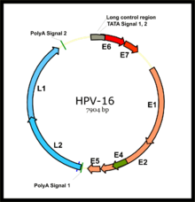 hpv cancer ribbon