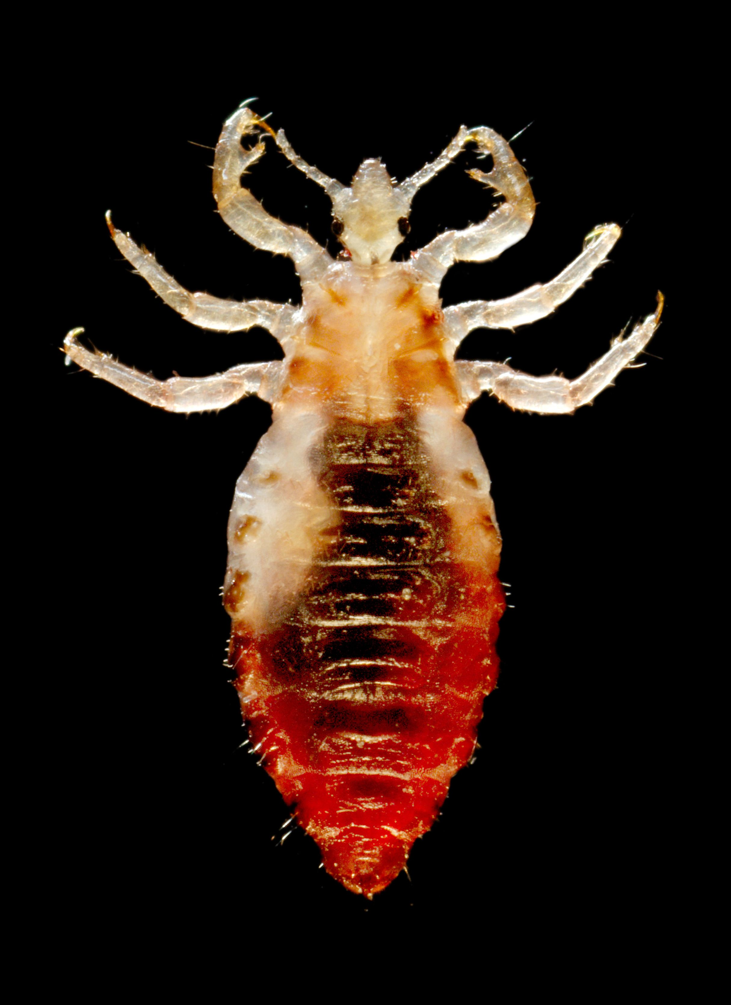 infestarea cu insecte