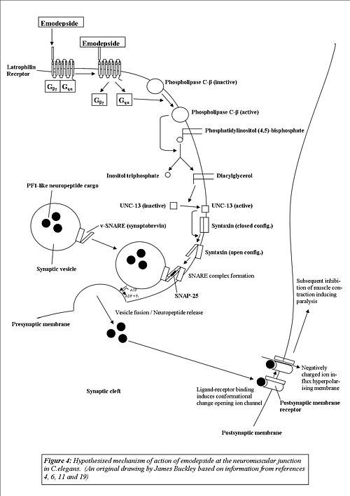 alimente curatarea colonului detection of human papillomavirus type 16 integration