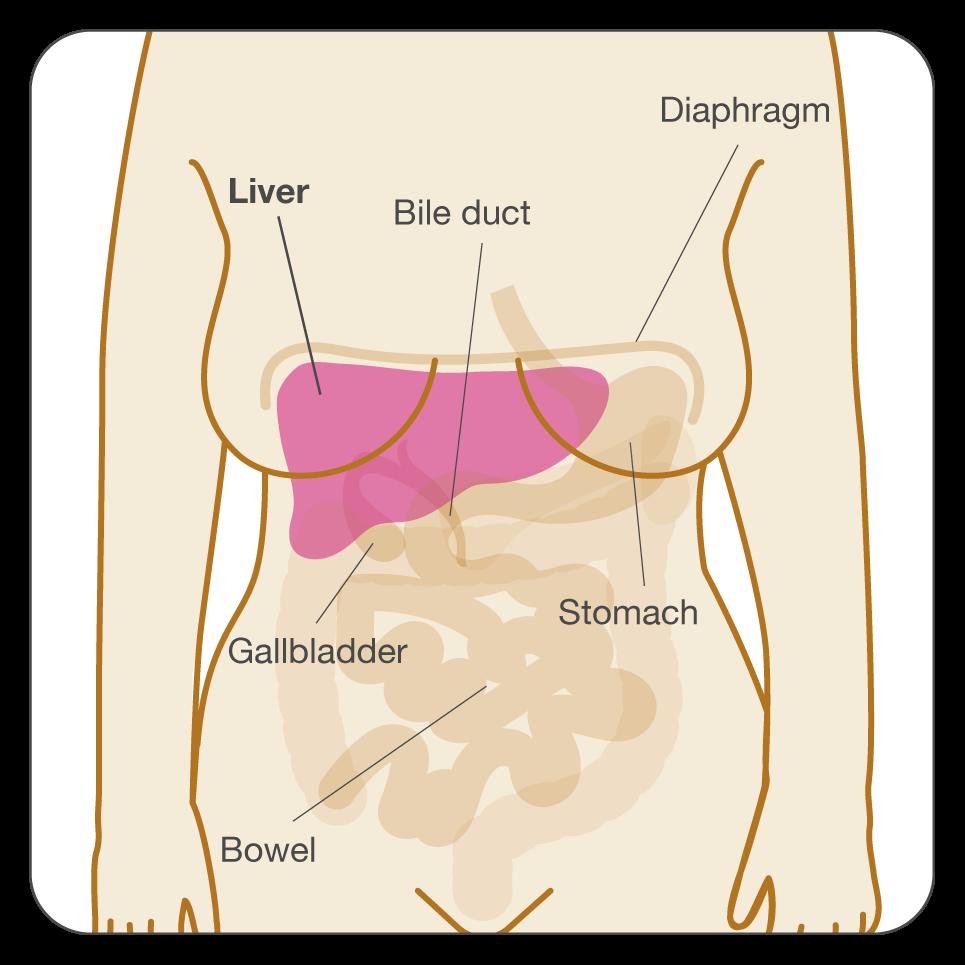 Paraziți în urină: Tipuri și tratament Oxiuri in vezica urinara