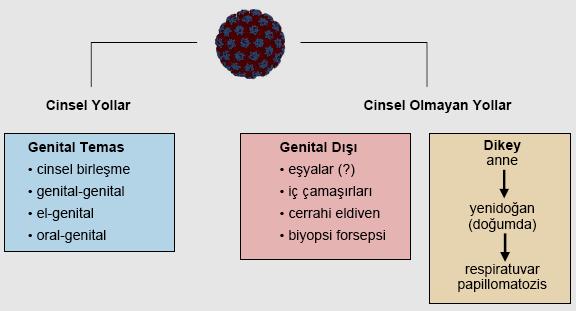 Papiloma la laringe - Papilloma bulasma yollar