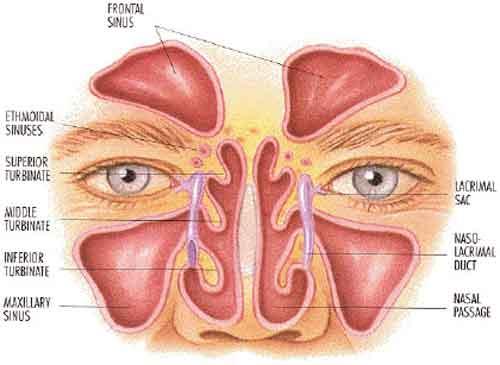 papilloma invertito naso sinusale sintomi este probabil cauzată de ectoparaziți