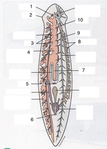 Demodecidoza (infectia cu Demodex), Paraziti gene - Paraziti pe gene