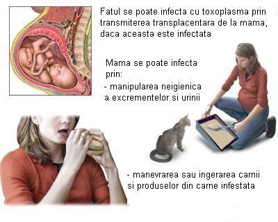 Toxoplasmoza in sarcina - Naste natural
