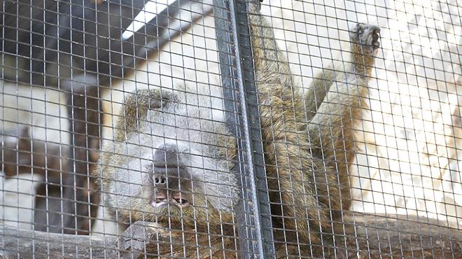 Grădina zoologică din Capitală are cinci membri noi. Cu ce sunt hrăniți și ce viitor îi așteaptă